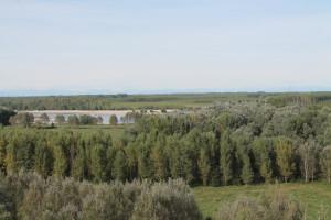 Pioppeti coltivati in golena del fiume Po
