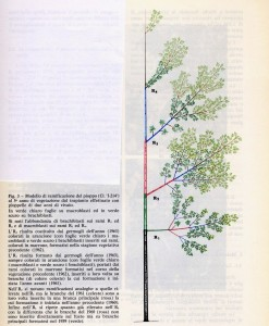 Schema per il campionamento delle foglie