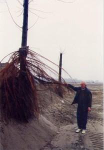 In un angolo di un giovane pioppeto è stato fatto un cumulo di sabbia alto fino a circa 4m; nel giro di una stagione vegetativa le piante hanno sviluppato un nuovo  apparato radicale.